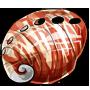 Shimmering Shell