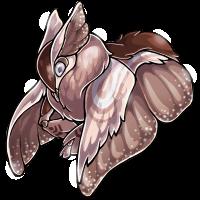 rosegold adult